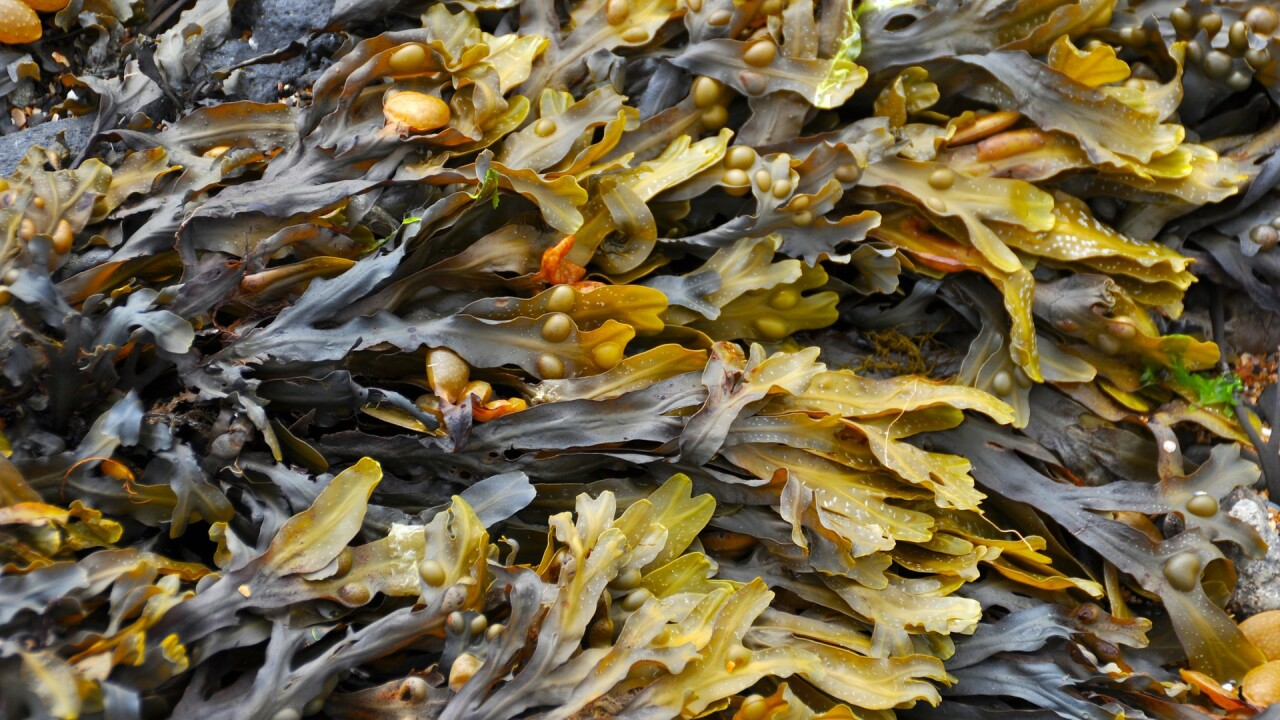 New study suggests seaweed influx will continue in Florida