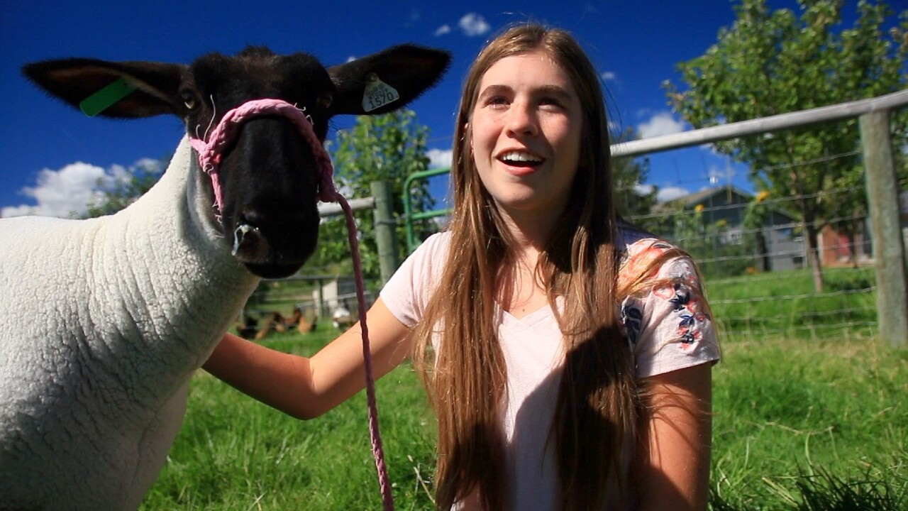Ravalli 4H Goat