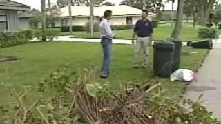 WPTV yard trimmings.jpg