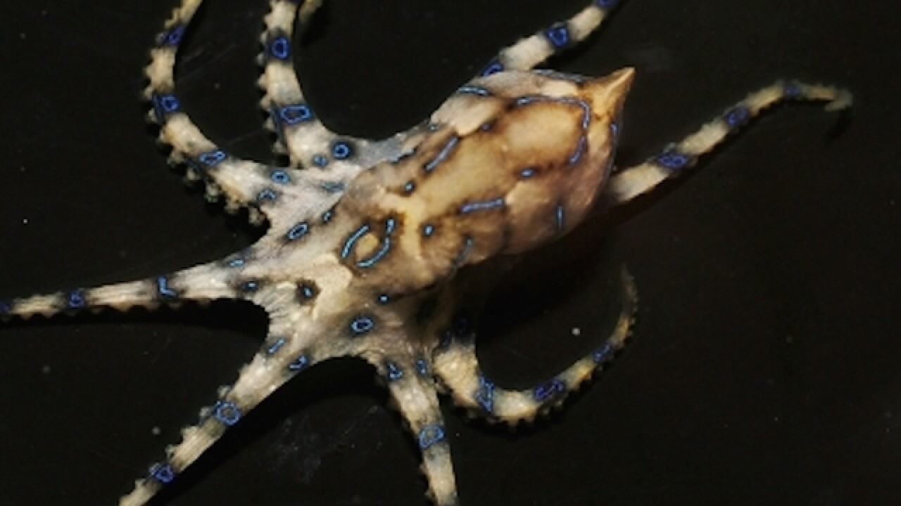 Octopus makes daring escape from New Zealand aquarium