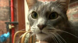 Humane Society of West Michigan supports lawmakers on anti-cat declawing bill