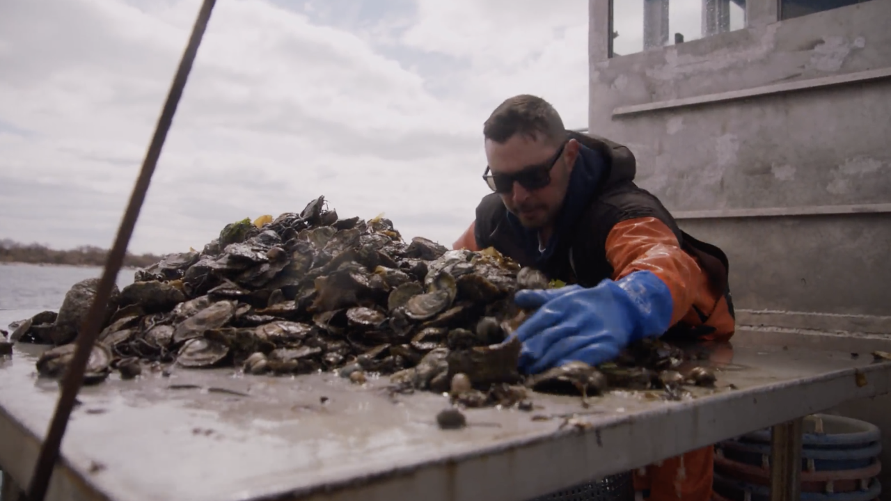 Oyster farmer tries to keep struggling company afloat amid virus outbreak
