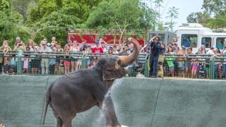 Reba Phoenix Zoo elephant