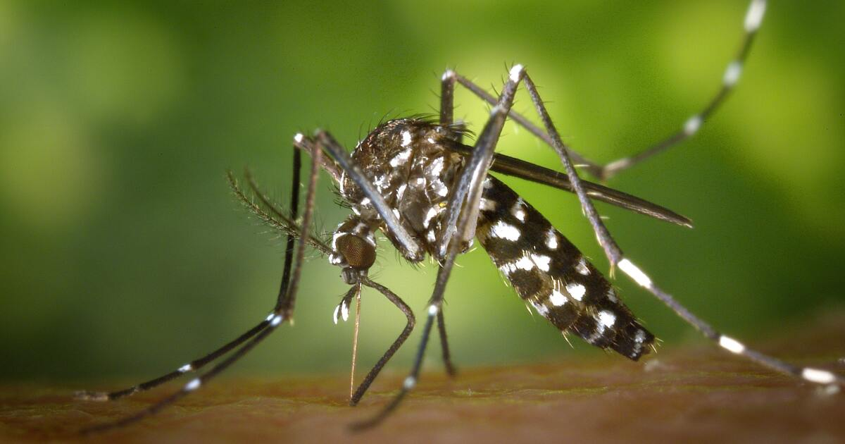 Mosquito-transmitted virus kills person in Elkhart County