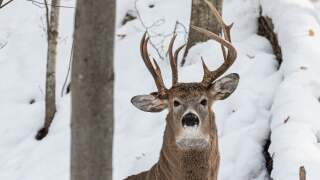 Rare three-antlered deer caught on camera by former Michigan lawmaker