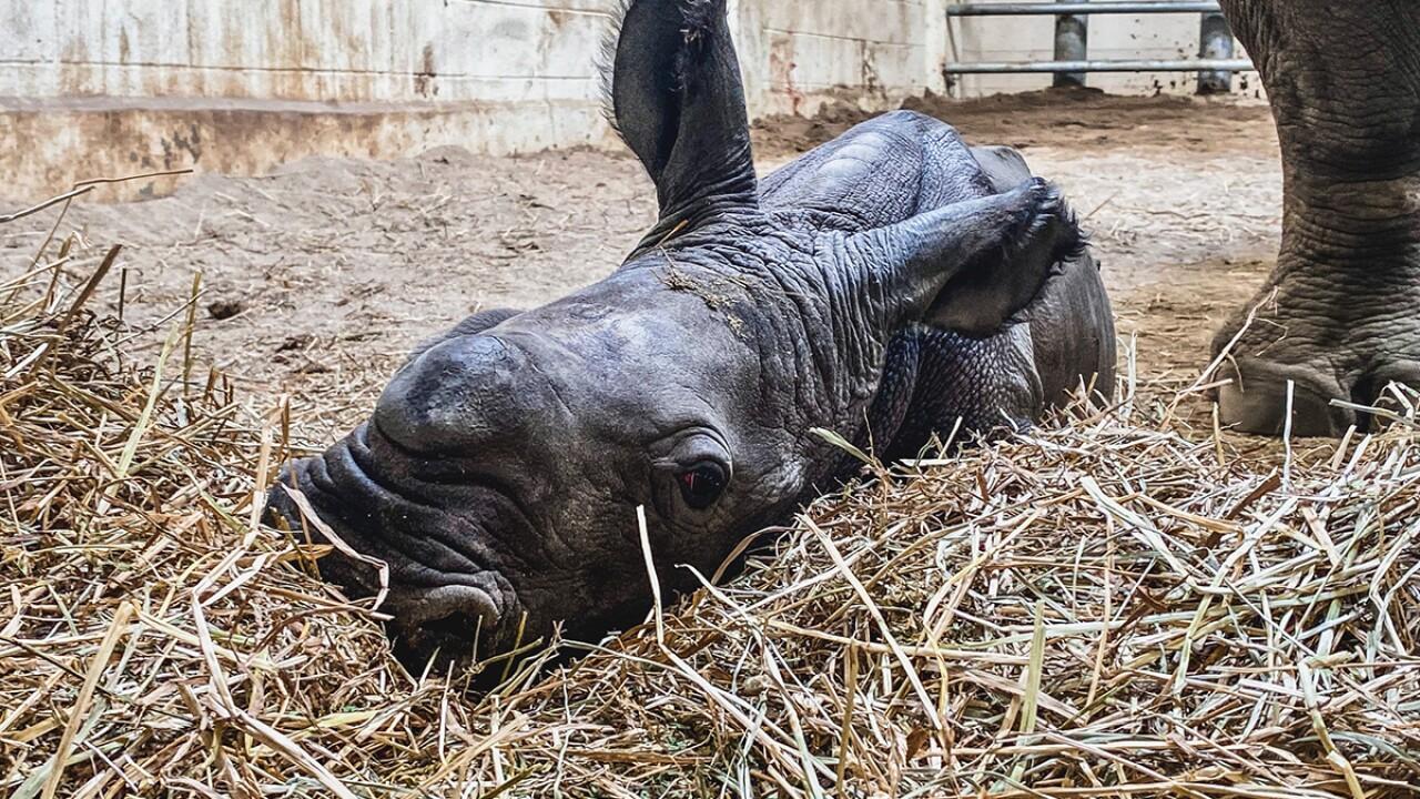 Virginia Zoo Photo 1.jpg
