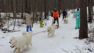Watch Dog Sledding