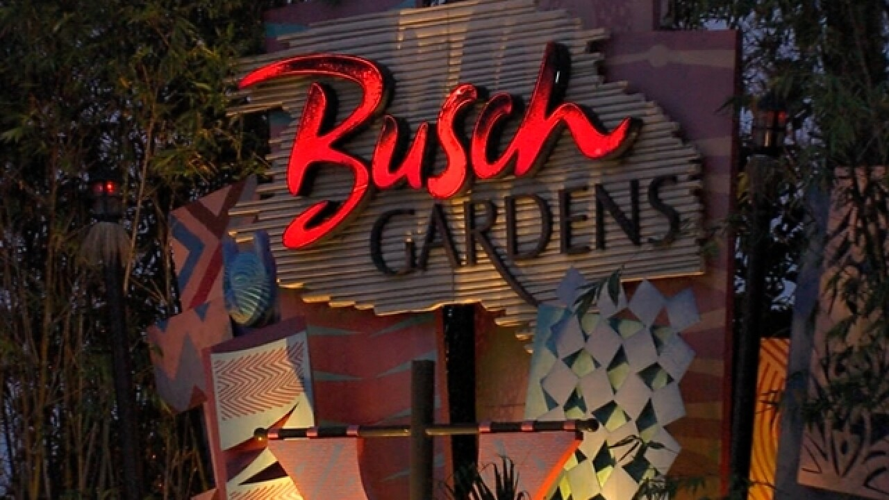 Celebratory gunfire injures man at Busch Gardens