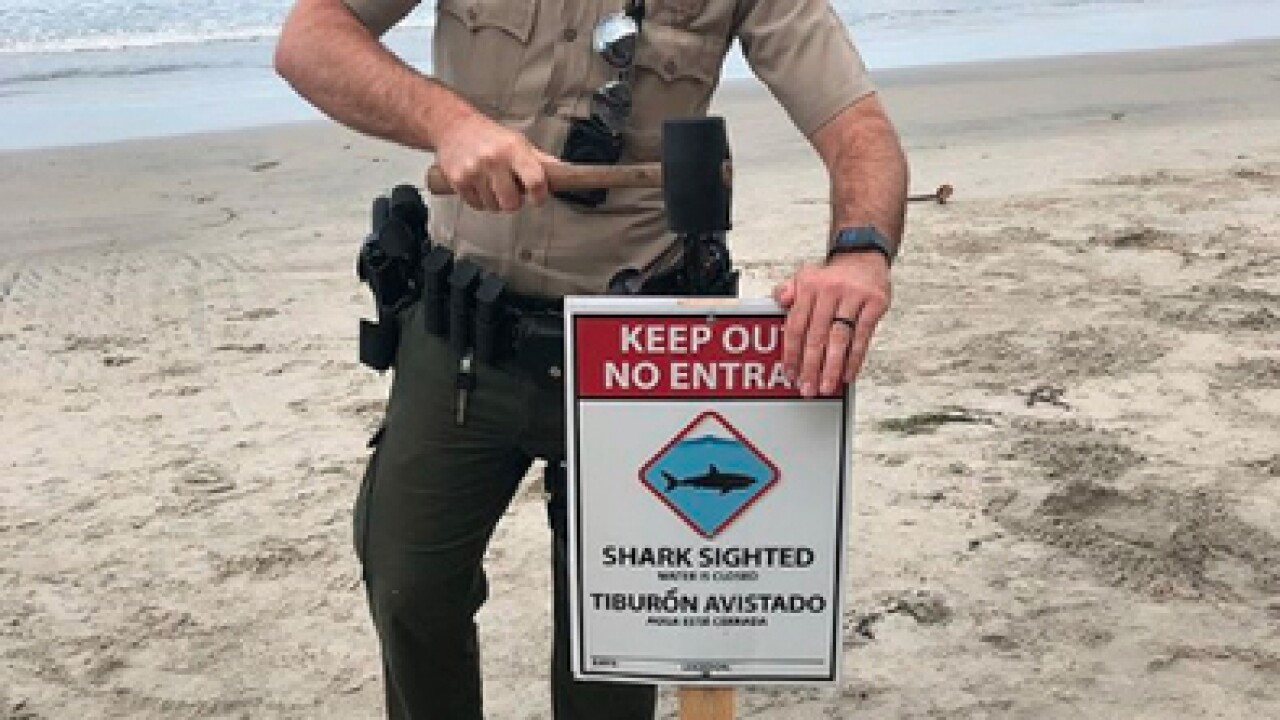 Child attacked by shark in California