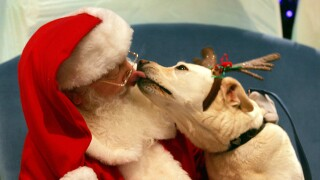 Pets Sit On Santa's Lap for Charity