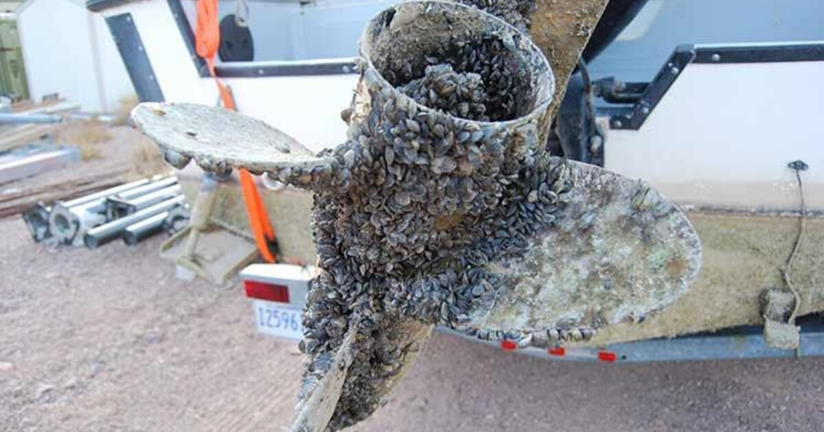 Invasive mussels: Montana's busy boat inspection stations see delays, illegal drive-bys