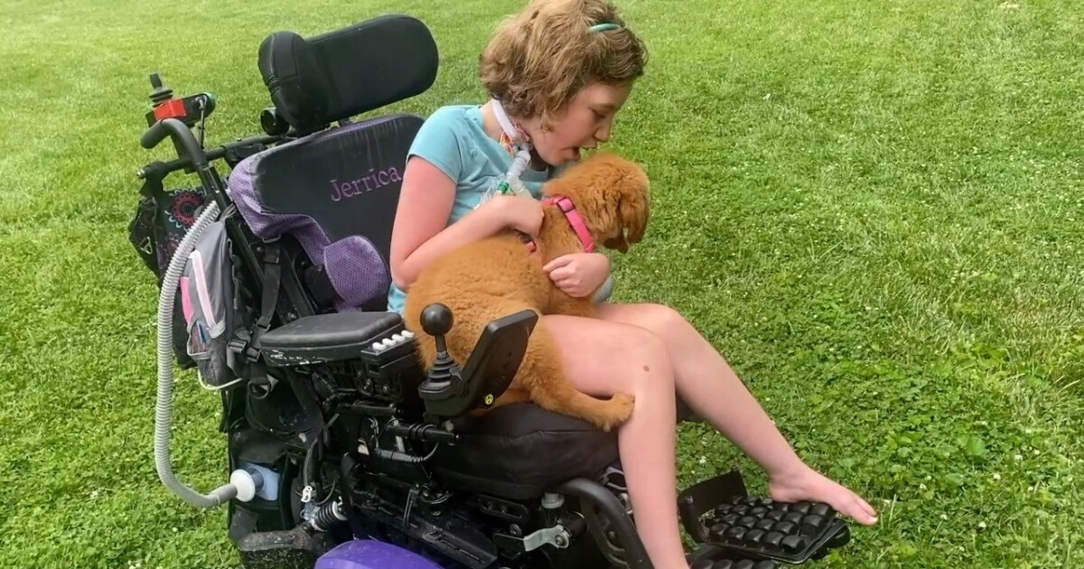 Girl with rare genetic condition gets gift of service dog thanks to the kindness of strangers