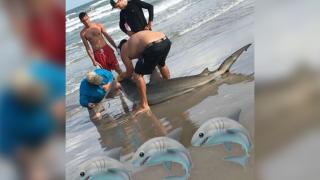 Local fisherman reel in a shark