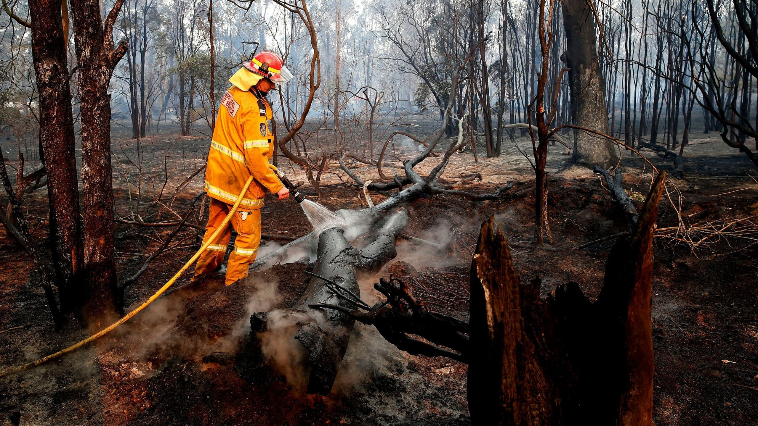Photos: More than 60 bushfires are burning in the state of New South Wales inAustralia
