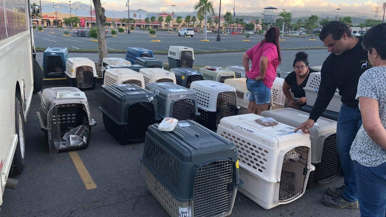 Virginia Beach pet rescue group flying in dogs from earthquake-stricken Puerto Rico