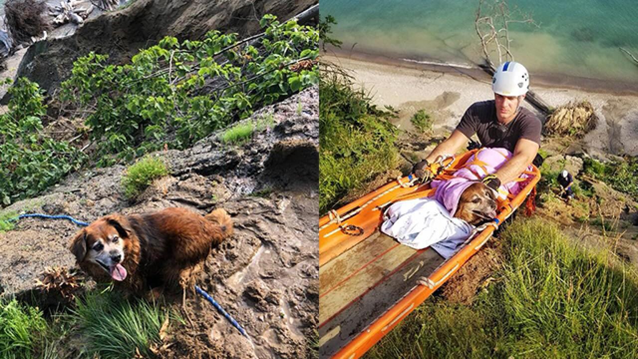 Dog named Karma rescued after falling over cliff