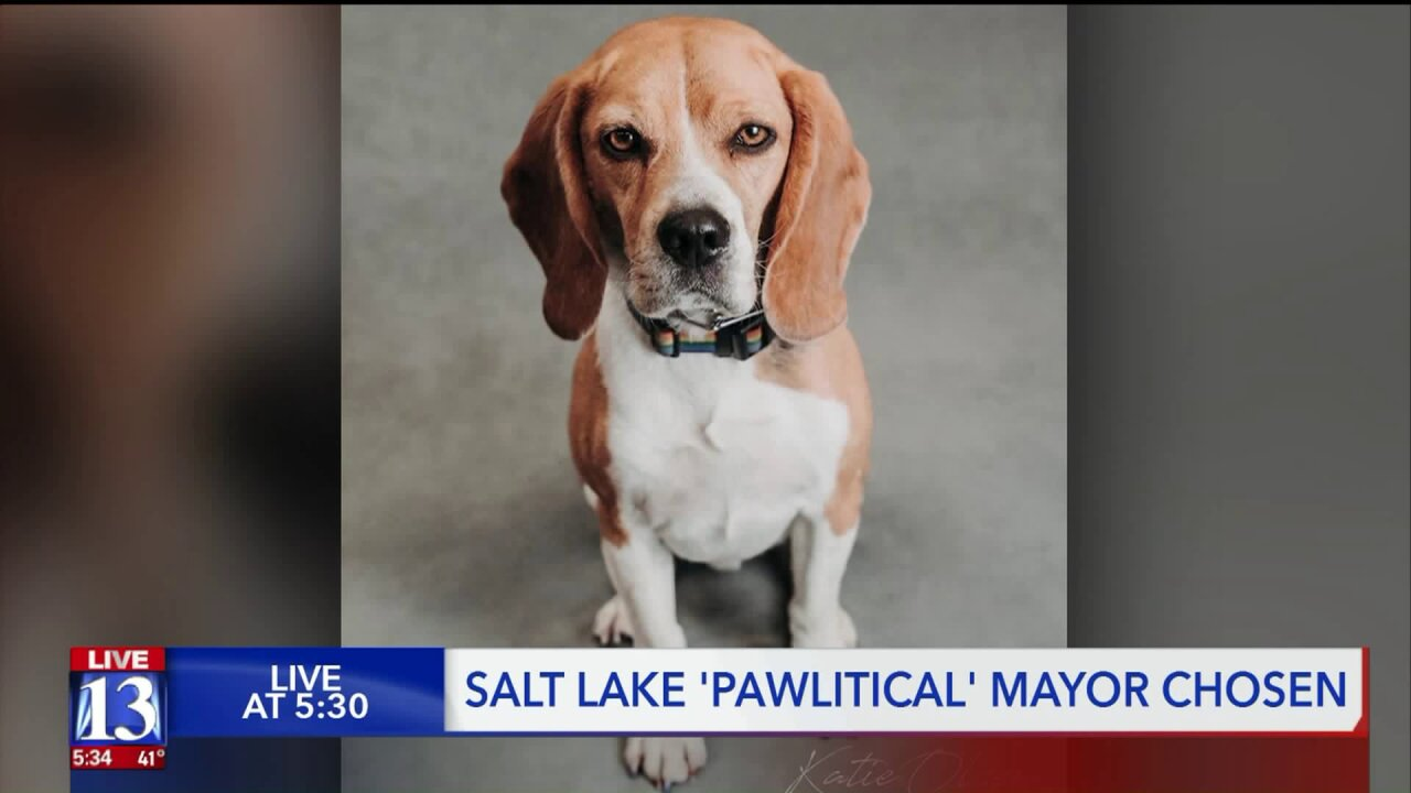 Salt Lake County swears in 'PAWlitical' mayor and council to advocate for pet adoption