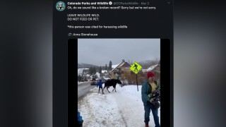 cpw do not harass the moose.jpg