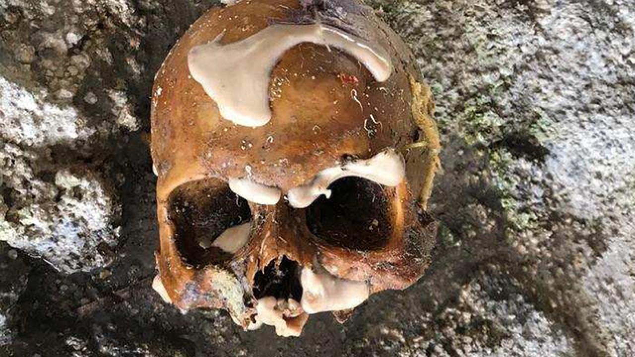 Florida Keys lobster divers find human bones