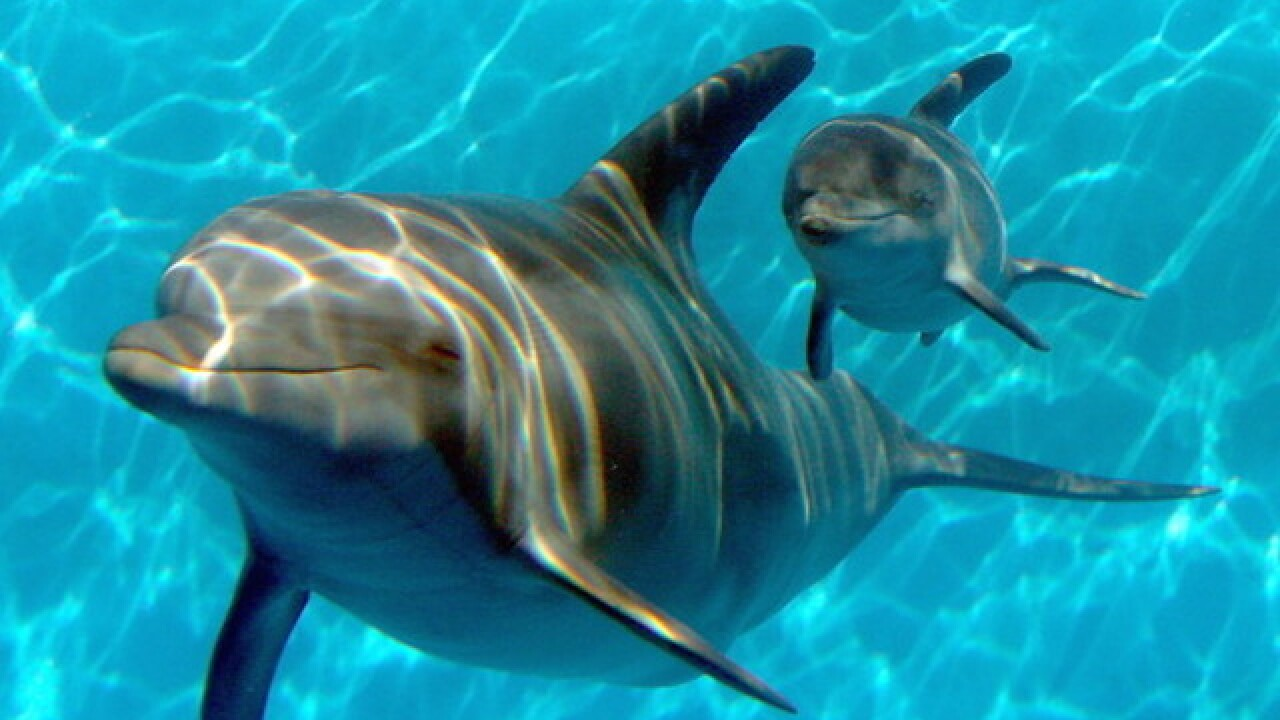 Swimming with dolphins in Hawaii could soon be illegal thanks to proposed ban