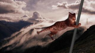 Windy mountain cat