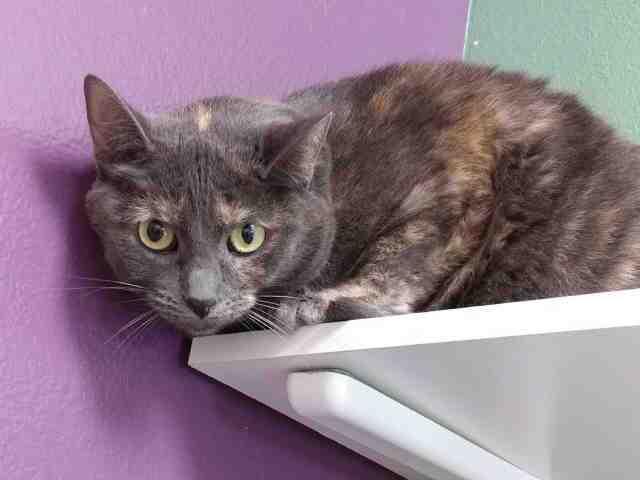 Adoptable pets from Arizona Humane Society and Maricopa County Animal Control (2/7)