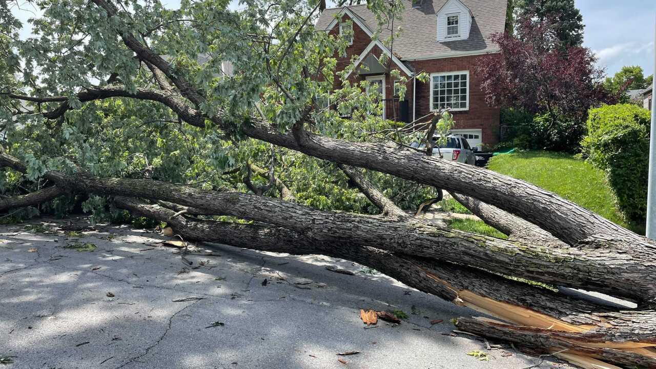 The storms that knocked down trees and power lines across eastern Nebraska this weekend left more people without electricity than any area storm in years.