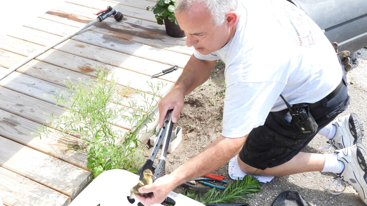 Ducklings rescued in South Haven