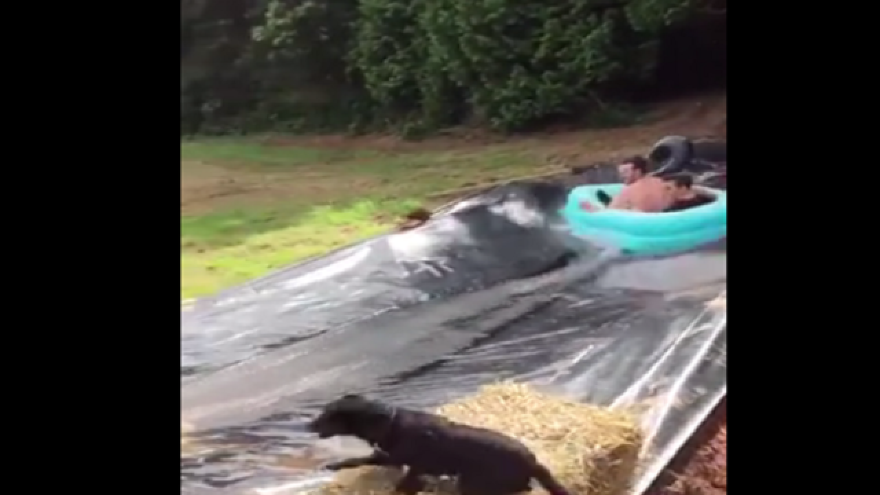 WATCH: Dog jumps in front of water slide, gets wild ride