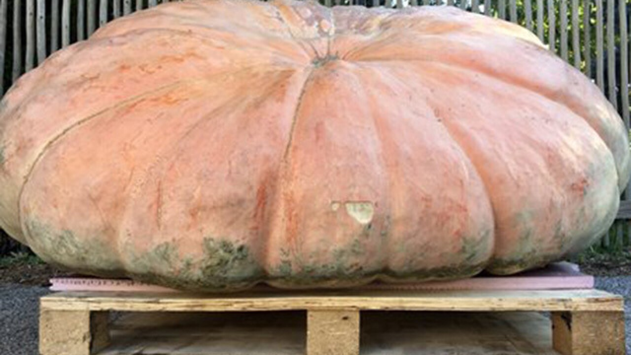 Elephants at CLE Zoo eat a 1-ton pumpkin