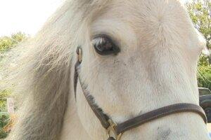 Mini horses visit health care heroes at Long Island hospital