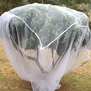 Tree netting.jpg