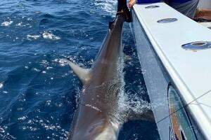 brendan with his shark.jpg