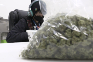 Higher education: Colorado college launching cannabis science degree program