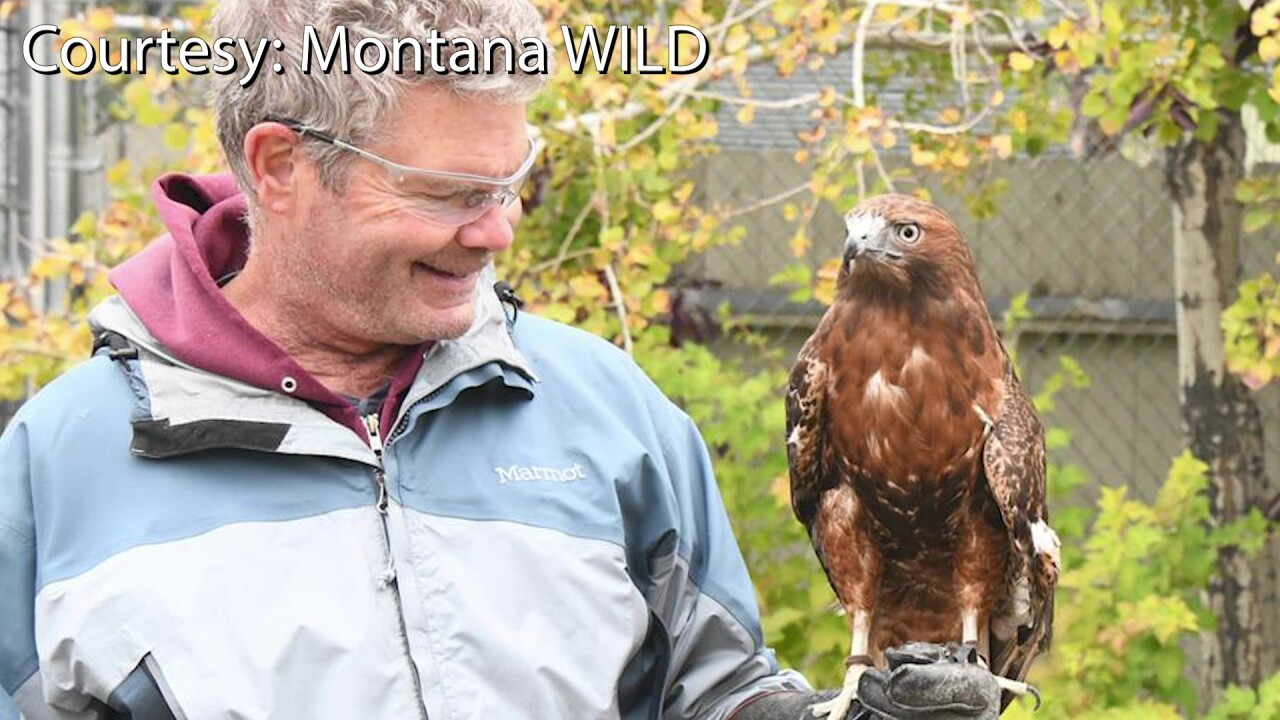 Montana raptor rehab program helps veterans recover from PTSD