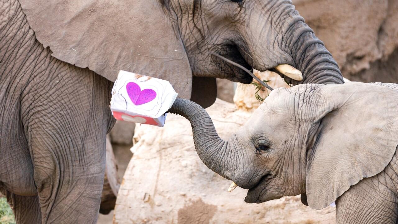 elephant0054.jpg
