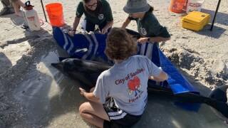 Dolphin stranding Sanibel 12-16-19 1.jpg