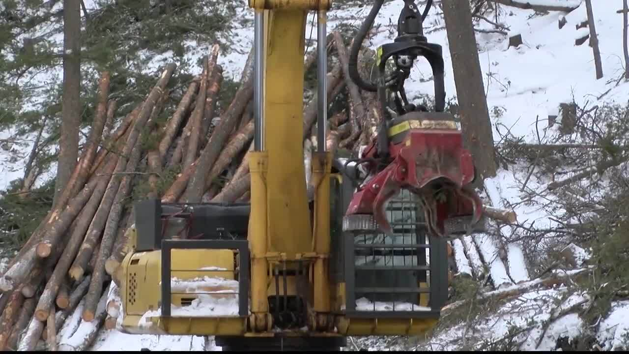 Grizzly Gulch Forest Mitigation