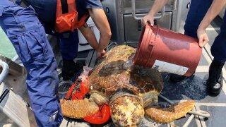 Injured sea turtle rescued in the Florida Keys