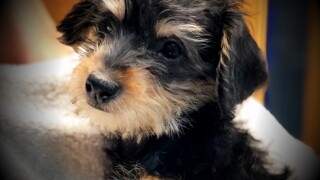 DUI arrest in Idaho leads to recovery of puppy stolen from Humane Society ofUtah