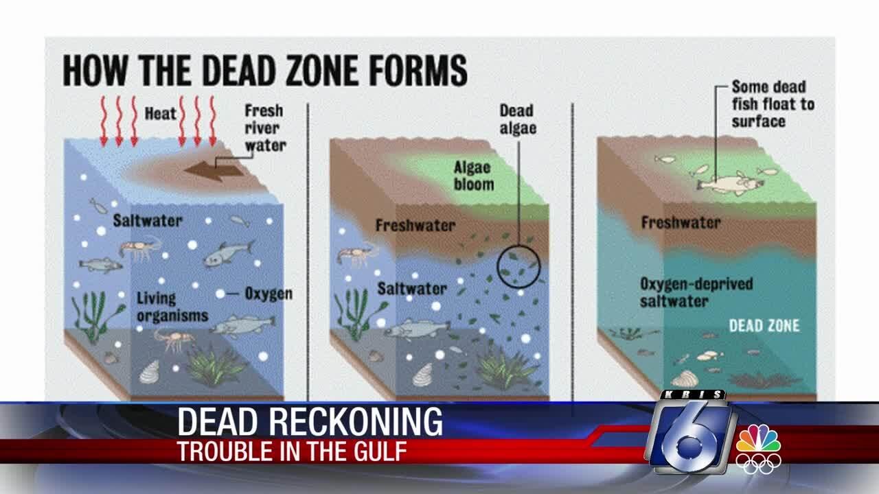 Gulf of Mexico dead zone 0221