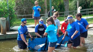 In this Oct. 17, 2019 photo made available by SeaWorld Orlando, employees release a rescued manatee back into the wild in Oak Hill, Fla. The manatee was released after it was treated for a torn lung likely sustained in a collision with a boat. SeaWorld rehabilitates sea animals that are ill, injured, stranded or orphaned, treating them with the goal of returning them to the wild.