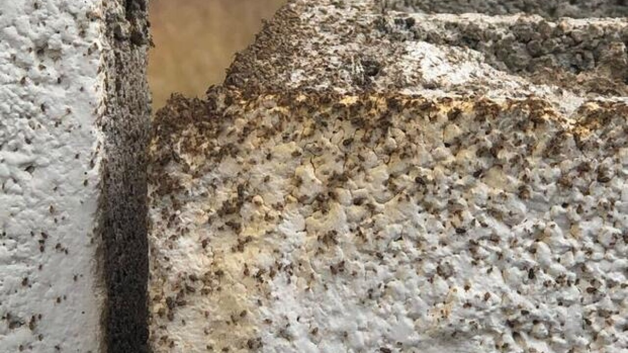 A Las Vegas family says their yard and driveway near Rainbow Blvd. and Alta Drive have been taken over by millions of bugs