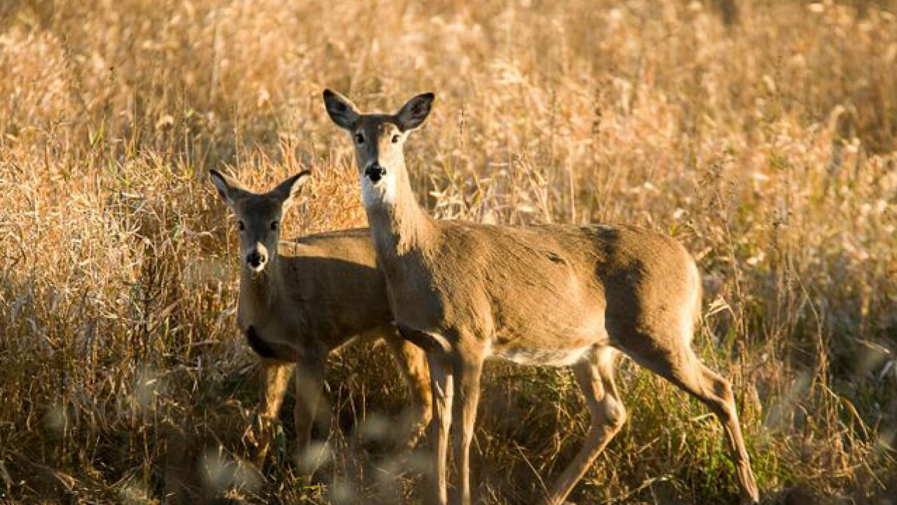 MDC releases preliminary numbers for deer, turkey hunting seasons