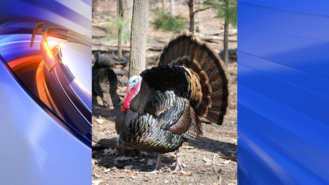Help name Virginia Living Museum's turkey and celebrate 10th annual pardoning in November