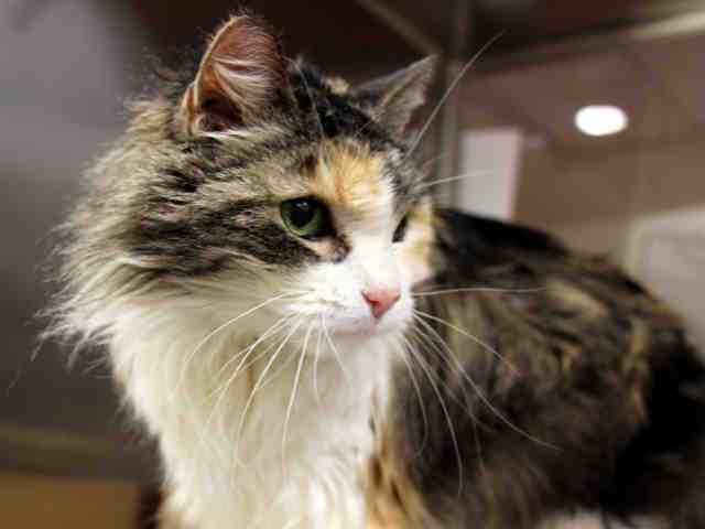 Adoptable pets from Arizona Humane Society and Maricopa County Animal Control (1/24/18)