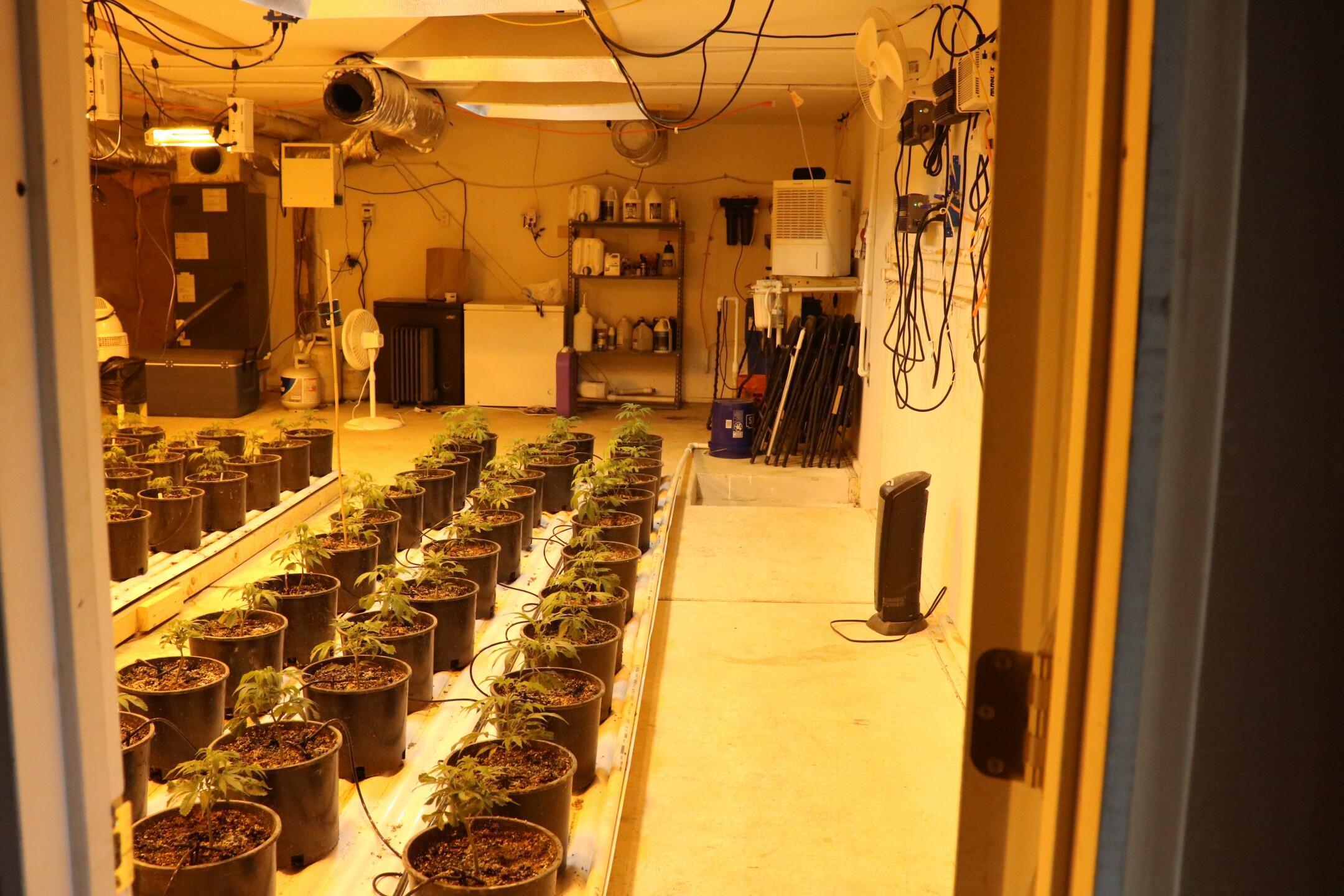Marijuana grow operation