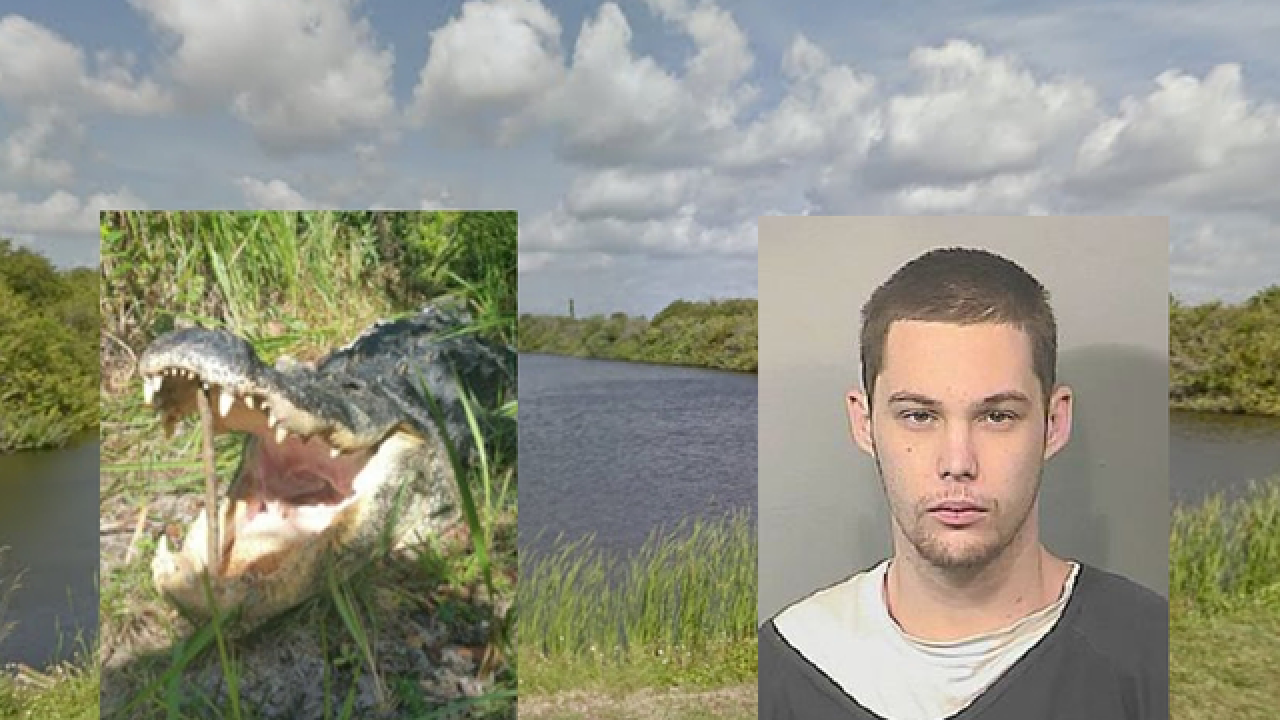 Florida man eaten by 11-foot alligator