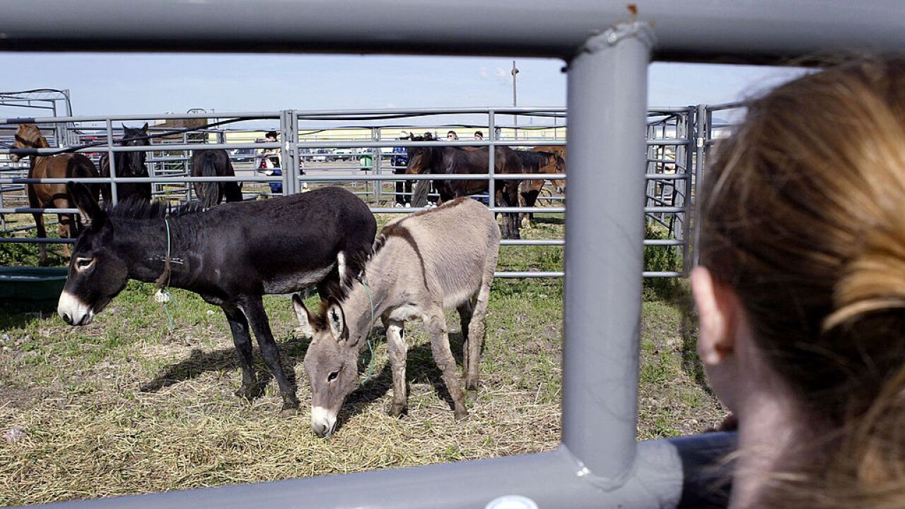 BLM Holds Wild Horse Adoption