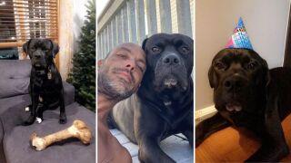 brooklyn crash lost dog shadow